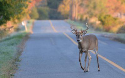 Avoid animals on the road